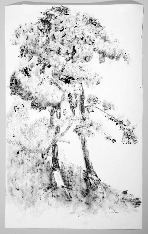 Photograph of the work of art: Cotman Tree